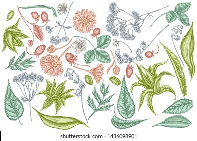 Vector set of hand drawn pastel aloe, calendula, lily of the valley, nettle, strawberry, valerian