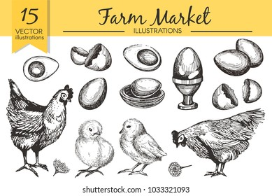 Vector set with hand drawn raw eggs, chicken,  boiled egg, shell, chicken on the white background