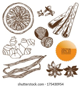 Vector set of hand drawn spices isolated on white background.