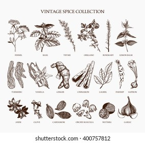 Vector set of hand drawn spices and herb sketch isolated on white background. Vintage ingredients collection for your menu or kitchen design
