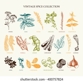 Vector set of hand drawn spices and herb sketch isolated on white background. Vintage spice collection for your menu or kitchen design