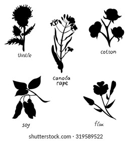 Vector set with herbs isolated on white background: thistle, canola, cotton, soy, flax. Handdrawn vector illustration