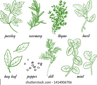 Vector set of herbs and spice: rosemary, basil, parsley, dill, bay leaf, black pepper, thyme, mint. Line graphic