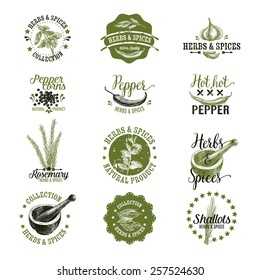 Vector set of herbs and spices  labels, badges and hand drawn design elements. . Logo collection.