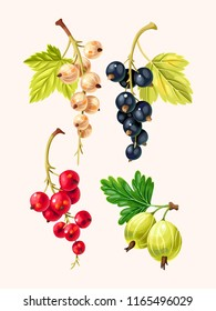 Vector set of high detailed currant berries