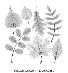 Vector set of high detailed skeleton leaves