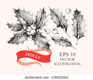 Vector set of holly leaves and berries