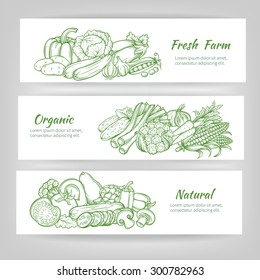 vector  set horizontal banners with  draw vegetables