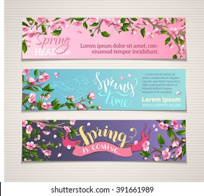 Vector set of horizontal spring banners. Pink cherry blossoms and leaves on tree branches. Hand-written brush lettering. Spring time! Spring is coming. There is place for your text.