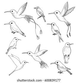 vector set of hummingbirds, hand drawn birds, isolated vector elements