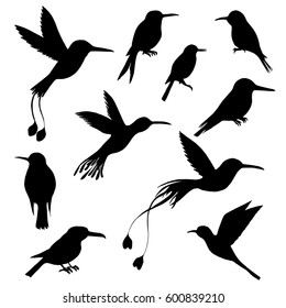 vector set of hummingbirds silhouettes, hand drawn songbirds, isolated vector elements