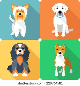Vector Set icon flat design dogs different breed: Cavalier King Charles Spaniel and Yorkshire terrier, Labrador Retriever and American Staffordshire Terrier