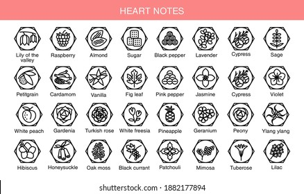 Vector set icons aromas heart notes. Heart notes pyramid chart with examples of popular aroma essences. Scent categories are oriental, woody, fresh and floral. Trend  examples of scents.