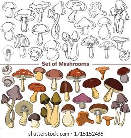 Vector set of images. Vector decorative sketch, illustration. Mushrooms