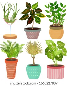 Vector set indoor house plant in pot. Tillandsia, Croton, Zanzibar Gem, Sword fern, Boston fern, DragonTree, Arrowhead vine. Collection of flat styled hand drawn exotic houseplant. Cute illustration.