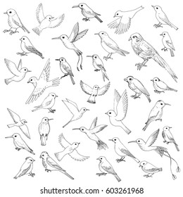 vector set of ink drawing birds, hand drawn songbirds, isolated vector elements