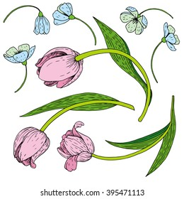 vector set of ink drawing tulips, hand drawn floral elements