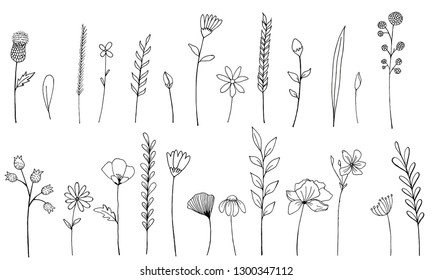 Vector set of ink drawing wild plants, herbs and flowers, monochrome botanical illustration + burdock, leaves, branches, daisy, grass, bud, blossom+isolated floral element, hand drawn illustration