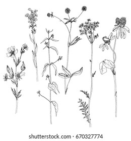 Vector set of ink drawing wild plants, herbs and flowers, monochrome botanical illustration in vintage style, isolated floral element, hand drawn illustration