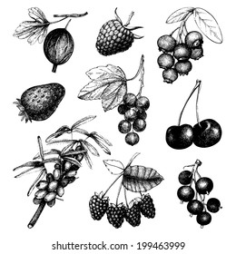 Vector set of ink  hand drawn vintage wild and garden berries. Vintage fruit and berry illustration isolated on white.