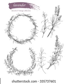 Vector set of ink hand drawn lavender illustration. Vintage collection of  lavender cosmetics sketch isolated on white.