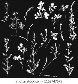 Vector set of ink stamp of herbs  on black background