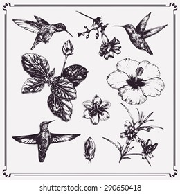Vector set of ink-pen hand-drawn illustration. Hummingbirds, hibiscus and tropical flowers. Graphic design. Engraving style