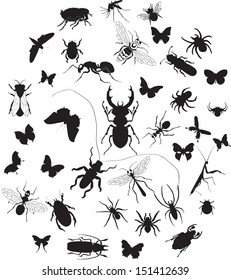 Vector set of insect silouettes isolated on white