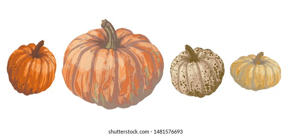 Vector set of isolated pattern with wonderful colorful different sort of pumpkins set on lines, hand-drawn, graphic, real-style. Seasonal colors: orange, beige, brown, green. Looks watercolor, fresh.