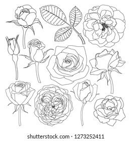 Vector set of isolated roses outlines. Hand drawn flower illustrations on white background. Floral elements collection.