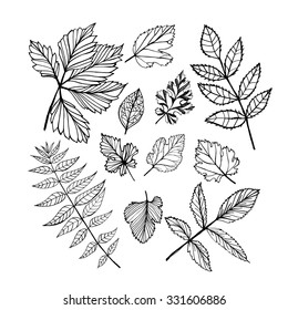 Vector set of leaves, collection of hand-drawn leaves. Isolated on white. Ink illustration. Hand drawn design elements.