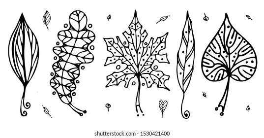vector set of leaves decorative outline