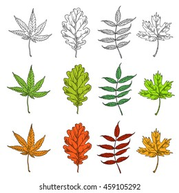Vector set leaves. Natural green leafs set. Leafs set element floral color garden art. Collection green tree leaves illustration.