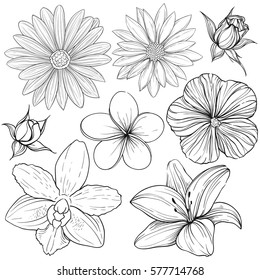 Vector set of linear silhouette outline sketches of various flowers isolated on white background. Lily, rose, orchid
