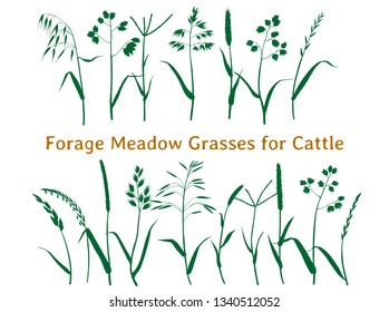 Vector set of meadow forage grasses for cattle. Pasture herbs. Silhouettes of sketch drawing.