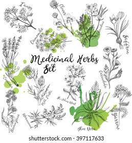 Vector set of   medicinal herbs sketches