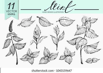 Vector set with mint illustrations