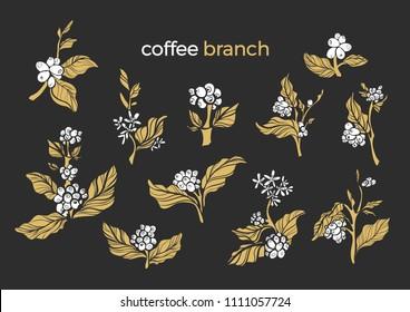 Vector set of natural coffee bush, branch, leaves, bean. Natural design. Floral shape illustration on black background. Organic food, tropical drink Nature golden icon,vintage symbol, vegan ingredient