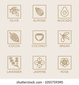 Vector set of natural ingredients and oils for cosmetics in linear style - packaging design templates and emblems - olive, almond, avocado, cocoa, coconut, argan, lavender, jasmine and rose