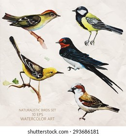 Vector set of naturalistic birds in watercolor style. Tit, Swift, sparrow and other birds. Watercolor sketch.