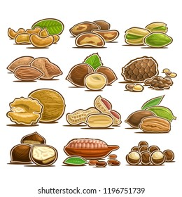 Vector set of Nuts, 12 cut out assorted heap of abstract hazel fruits for healthy nutrition, collection of isolated various piles of nut kernels in nutshell for packaging of natural snacks on white.