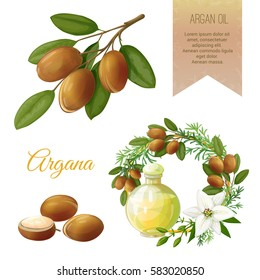 Vector set on Argan, its fruits and its application. Argan oil. Frame and Label. It achieved in a realistic style. All objects isolated