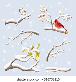 Vector set on winter branches with snow, birds. Red Cardinal on a background of falling snow