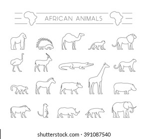 Vector set of outline African animals. Line silhouette of gorilla, warthog, porcupine and dromedary.