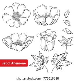Vector set with outline Anemone flower or Windflower, bud and leaves in black isolated on white background. Ornate Anemones in contour style for spring design or coloring book.