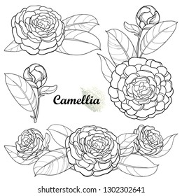 Vector set with outline Camellia flower bunch, bud and leaf in black isolated on white background. Ornate evergreen plant Camellia in contour style for summer design or coloring book.