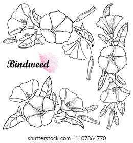 Vector set with outline Convolvulus or Bindweed flower bunch, bell, leaf and bud in black isolated on white background. Climbing Bindweed flower in contour style for summer design or coloring book.