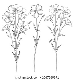 Vector set with outline Flax plant or Linseed or Linum flowers bunch, bud and leaf in black isolated on white background. Ornate cultivated Flax in contour style for summer design and coloring book.