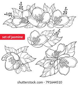 Vector set with outline Jasmine flower bunch, bud and ornate leaves in black isolated on white background. Ornate floral with Jasmine flower in contour style for spring design or coloring book.
