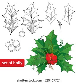 Vector set with outline leaves and berries of Ilex or European Holly isolated on white background. Traditional Christmas and Happy New Year symbol in contour style for winter design and coloring book.